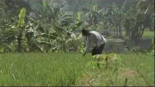 Farmers speak out on government subsidies - 8 Sep 2007