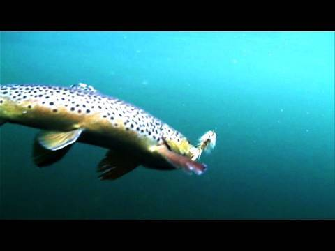 Fishing Utah's Green River-part 1