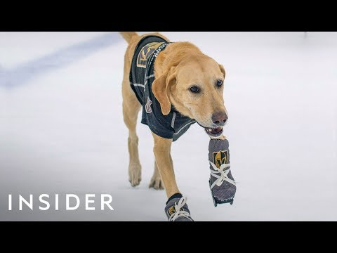 Pat McMahon - Rescue Dog Learns To Ice Skate In Adorable Video
