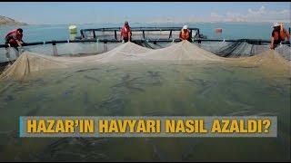 Hazar'ın havyarı nasıl azaldı? - Al Jazeera Türk Belgeseli