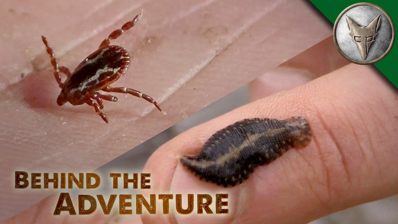yuck avoiding ticks and leeches youtube