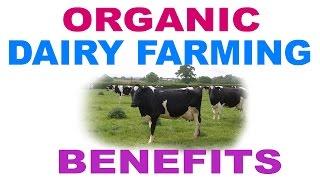Organic Dairy Farm - Benefits of Organic Dairy Farm - जैविक दुग्ध डेयरी के फायदे