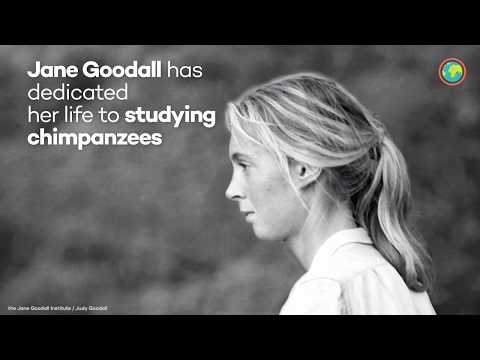 Ecosia supports Jane Goodall's work in Uganda