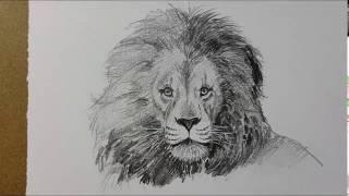 Набросок льва карандашом