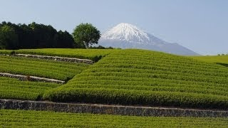 新緑の茶畑と富士山 Mt.Fuji and Green Tea plantation (Shot on RED EPIC)