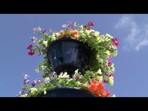 Pembrey & Burry Port's entry into the Wales in Bloom Competition 2015