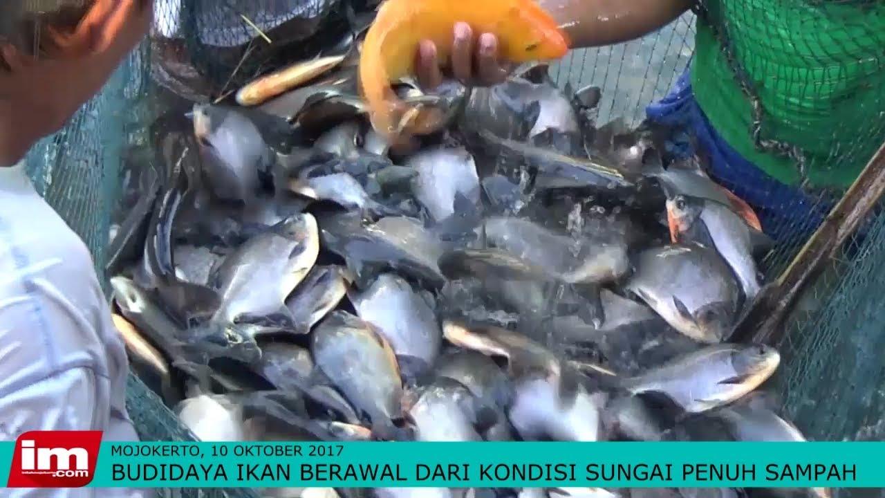 Sukses Budi Daya Ikan Hias Air Tawar Daftar Harga Terbaru Dan 101 Kiat Budidaya