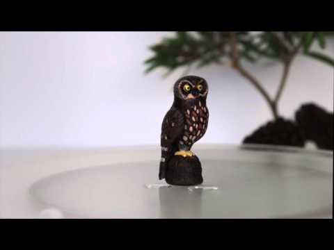 Boobook Owl - Science & Nature 2015