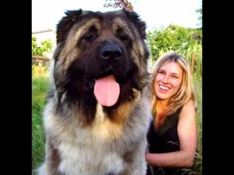 Biggest Dog in the World 5
