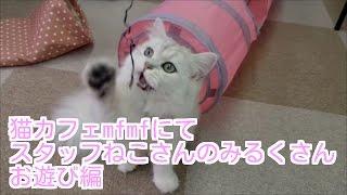 関内駅から徒歩1分にある猫カフェmfmf。 常駐スタッフねこさんのみるく...