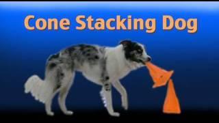 Dog Stacks Cones- Amazing Border Collie Tricks!