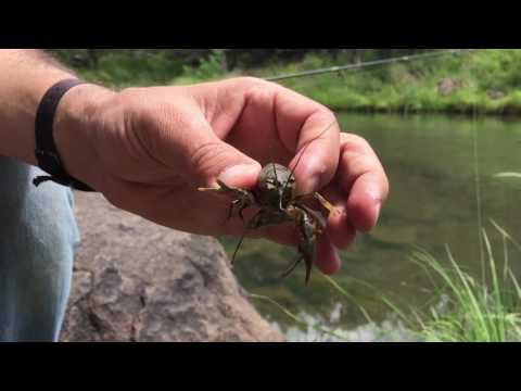 Sunfish and mudbugs: how to do family fishing in AZ