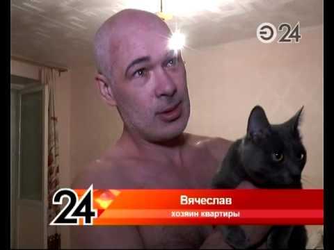 Кот спас хозяина от пожара - Goodnewsanimal ru
