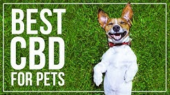 CBD For Pets North Miami Beach