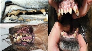 Dog Dental Diseases: Prevalence Factors (in hindi )