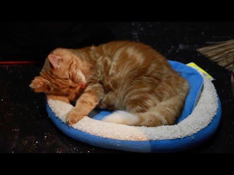 Cara Melatih Kucing Tidur Di Kasurnya Sendiri