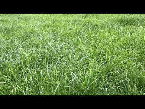 Dairy Know-How: Grow more grass