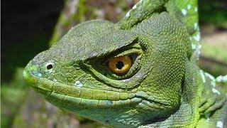 10 Animales Reales Que Parecen Sacados De Una Película