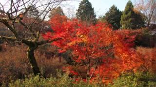 Autumn Japan Syksy Tofukuji Ishiyamadera Photo by Kari Gröhn karigrohn karigrohn.com karigrohncom
