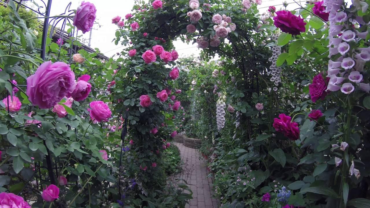 open garden 2016 rose wakaba garden
