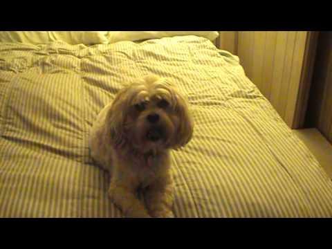 dog-steps-for-bed-under-$10-#2