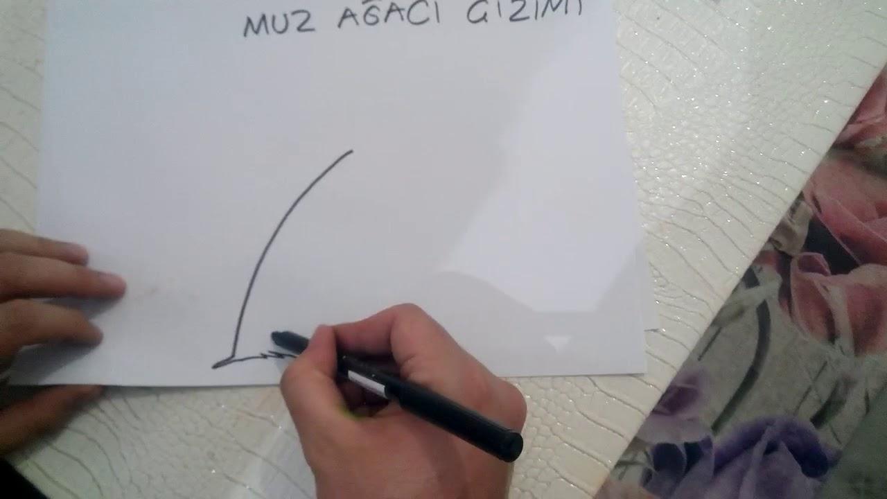 Muz Agaci Cizimi Youtube