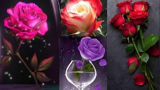 Rose Hd #wallpapers # screenshot 2