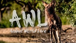 Animal World Live | Friday 22 May 2020 | Guest - Cole du Plessis from the Endangered Wildlife Trust