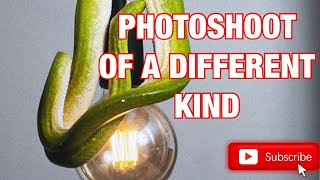 SNAKE PHOTOSHOOT OF A DIFFERENT KIND!!