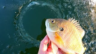 Ice Fishing for BIG Bluegill on THIN Ice!!!