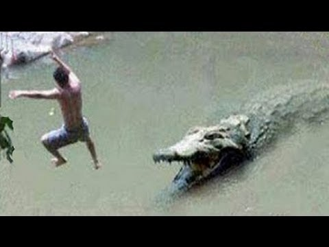 Crocodile Will Shock You : Best Documentary Of All Time