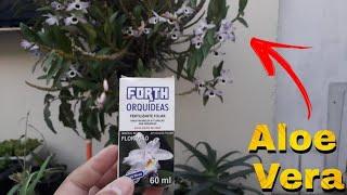 """Aloe Vera + Adubo Foliar """" Fórmula Secreta para Florir sua ORQUÍDEA """""""