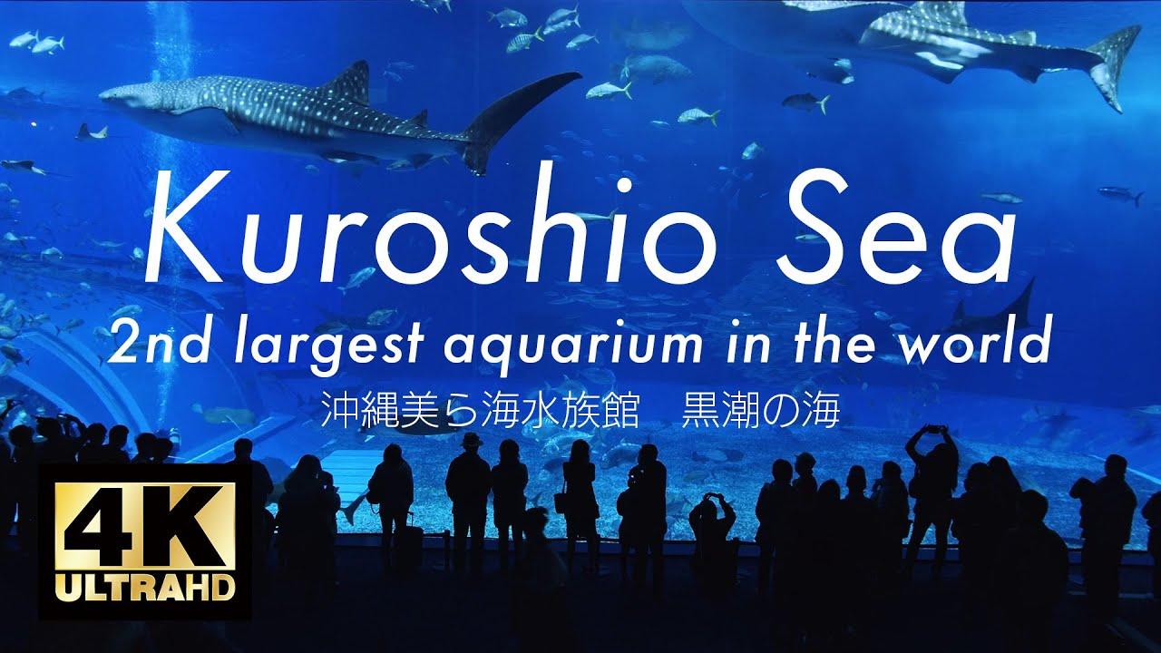 aquarium 4k - Wallpaper: Aquarium Fishes 2017 - Fish Tank Maintenance