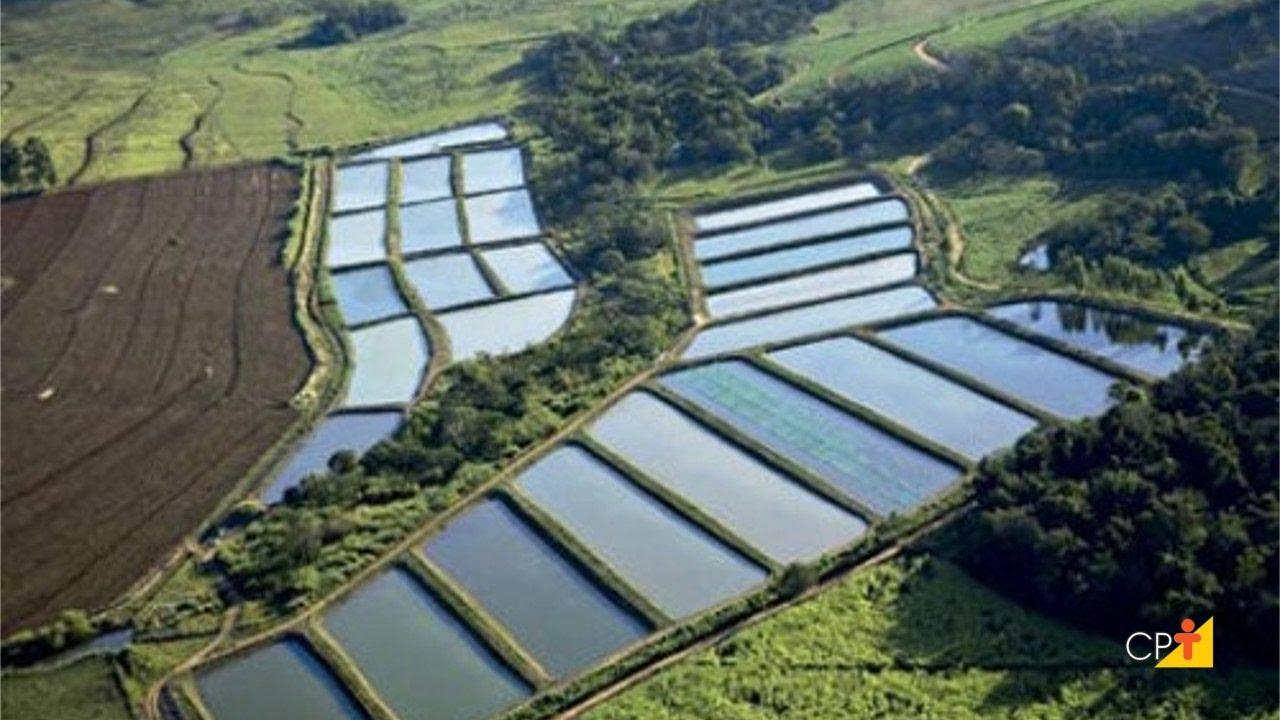 Curso a dist ncia cria o de peixes como implantar uma for Elaboracion de estanques para piscicultura