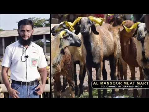 BEST SHEEP MEAT & GOAT CHEVON  MODEL MART : HYDERABAD,INDIA
