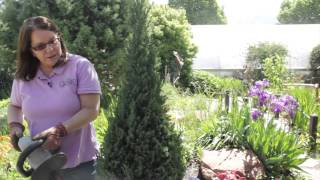 How to Use Electric Hedge Clippers : Grow Guru