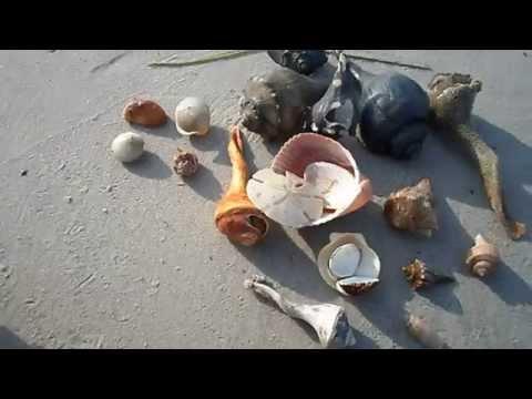 Shelling at the Point at Emerald Isle, North Carolina