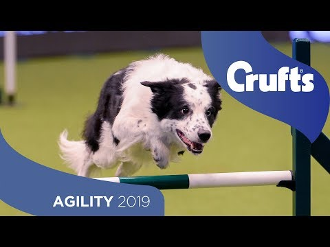 Agility - Crufts Team Large Final Part 2 | Crufts 2019