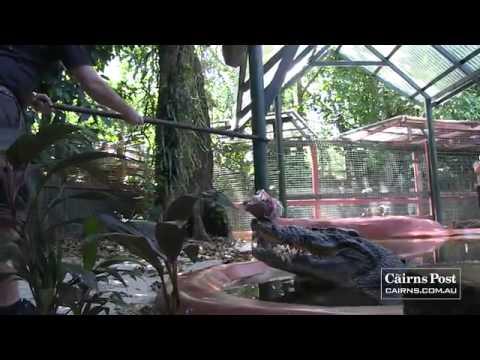 Con cá sấu khổng lồ nặng    gần 1 tấn Blogthuthuatvitinh tk