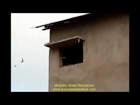 Malaysia Swallow's House 2012 YouTube