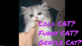 Funny Cat Videoa Collection Of All Kinds Of Cats