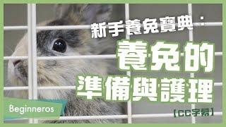 【寵物教學】新手養兔寶典:養兔的準備與護理|Beginneros