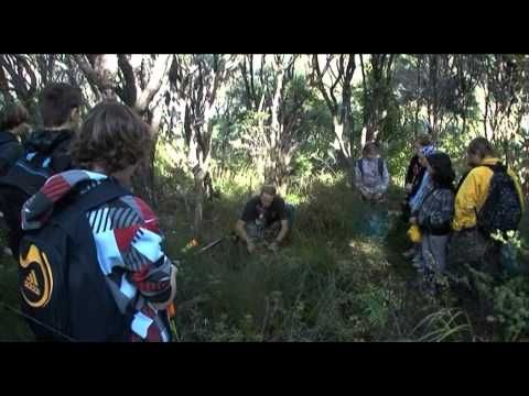 Kauri 2000 Videos