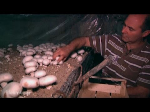 Paris Mushrooms Grown in Caves Are Back in Style