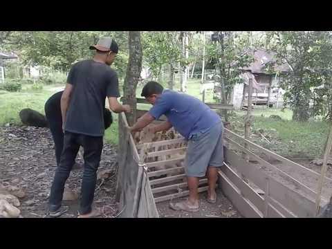 Peluang Bisnis Yang Menguntungkan Di Desa | 06 Peluang ...