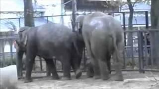 elephantsexytpmv source