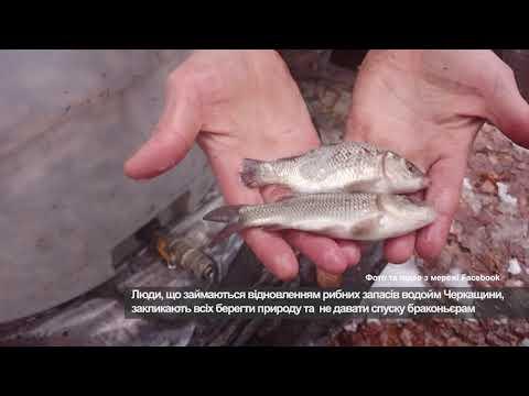 Телеканал АНТЕНА: Зариблення річок Черкас та Сміли продовжується