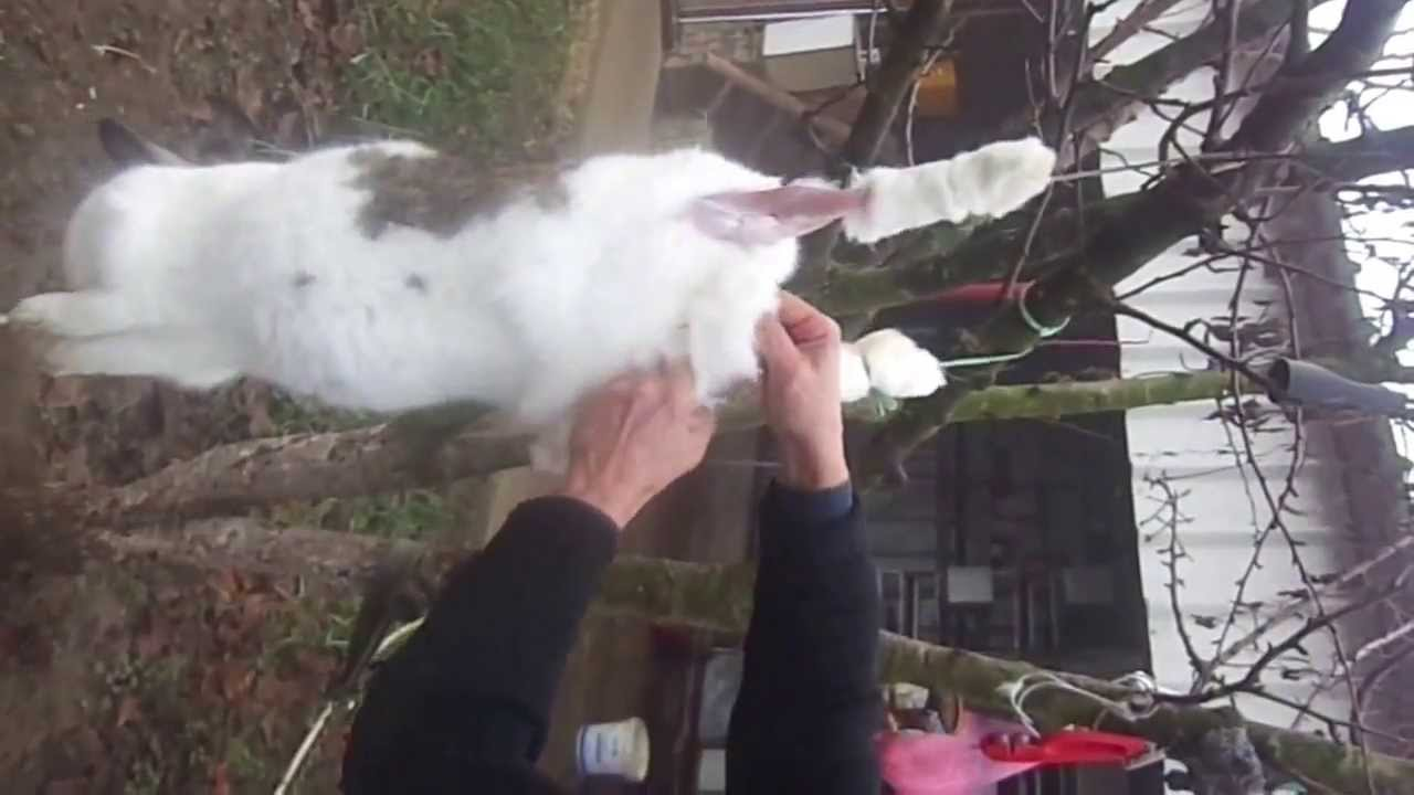 Убои Кроликов Видео