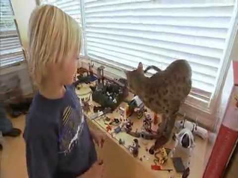 cats 101 Savannah