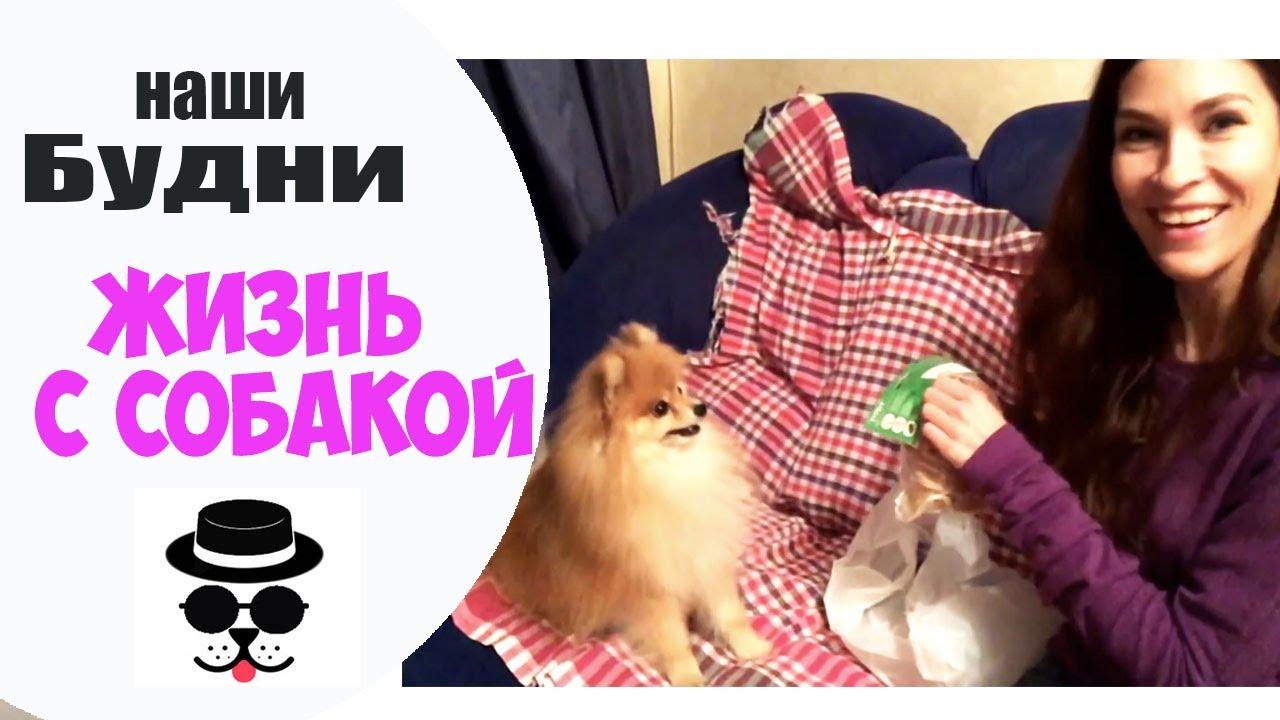 Купить супер мини щенка померанского шпица, девочка бело кремового .